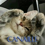 icone canaille