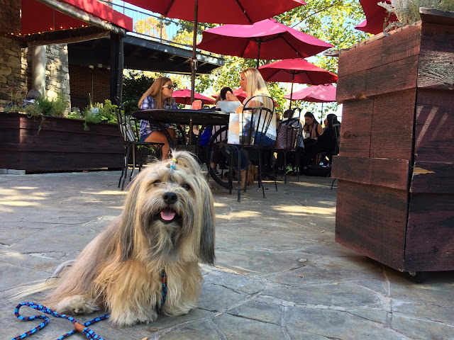 Rocco Havanese at Passerelle Bistro in Greenville