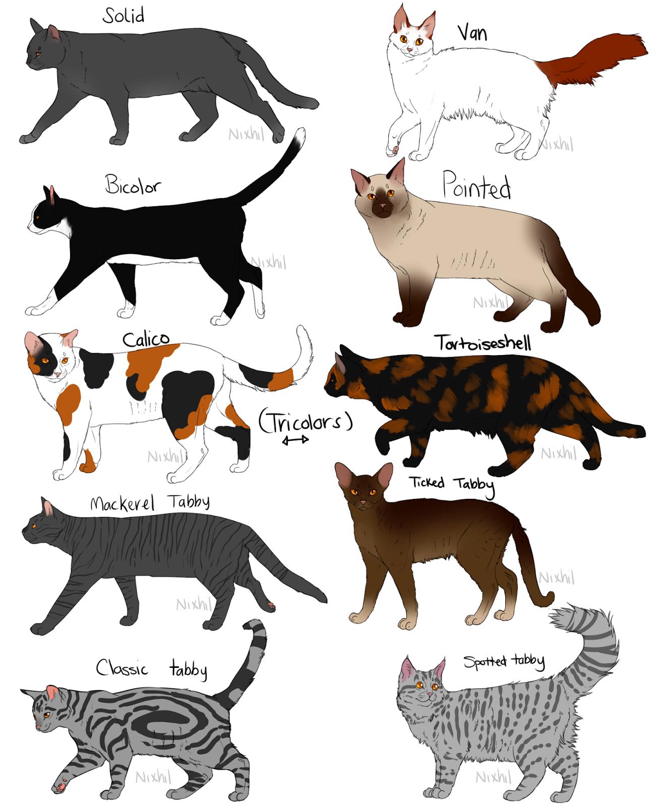 TODO SOBRE MI GATO: Patrones de los gatos