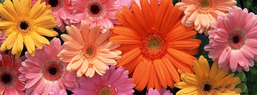 Cute Babies With Flowers Wallpaper Quot Floral Fb Timeline Covers Quot Fb Status