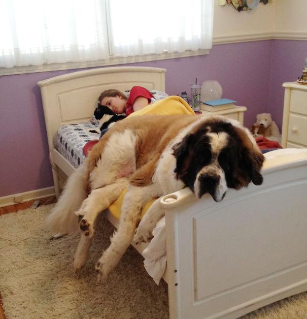 20 Σκύλοι που δεν σου επιτρέπουν να κοιμηθείς στο κρεβάτι σου απόψε!
