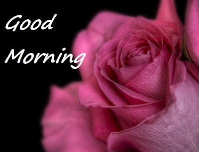 Good Morning Wise with Red Rose