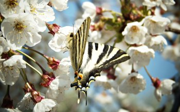 Wallpaper: Flowers Spring Monarch Butterfly