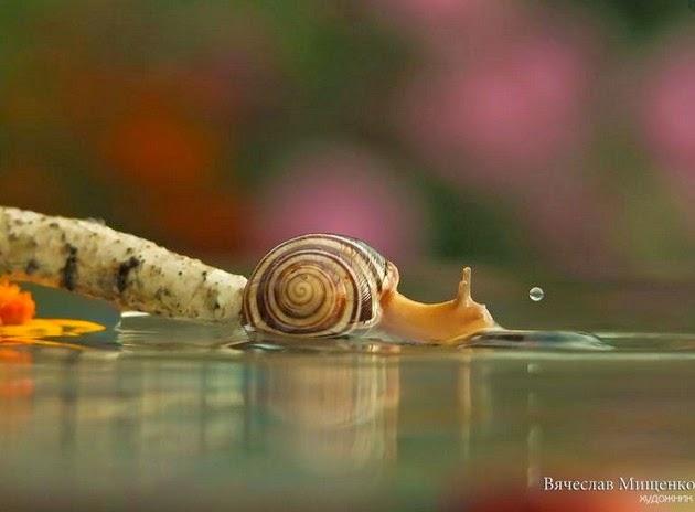 snail-macro-photography-vyacheslav-mishchenko-7