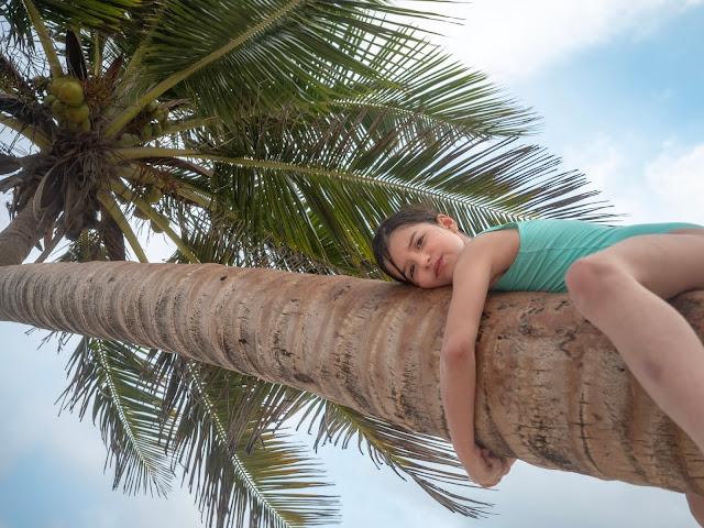 Niña con bañador turquesa subida a una palmera