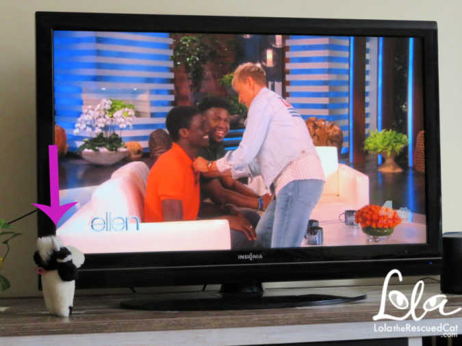 Moo the traveling cow