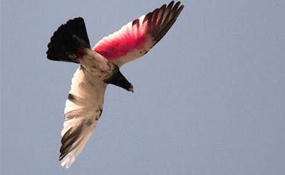 India Tangkap Burung Merpati Pembawa Pesan Ancaman pada PM Narendra Modi