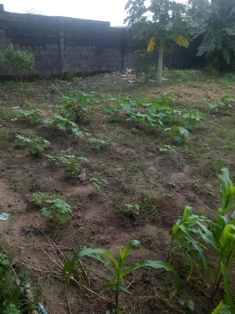 rice nursery farm