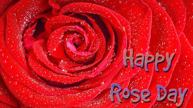 Nice-maroon-rose-day-wallpaper