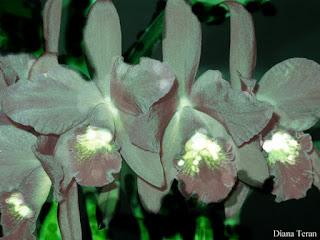 Arte de Diana_Teran_Arte con flores_ http://dianateran01.blogspot.ar/