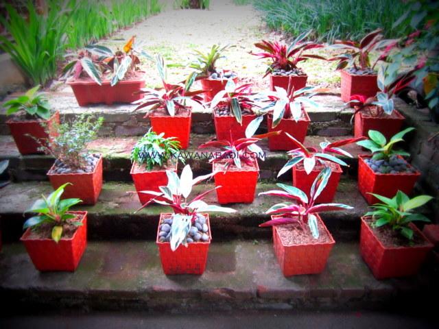jasa sewa tanaman dan pembuatan taman pada gedung-gedung perkantoran, hotel dan juga perumahan