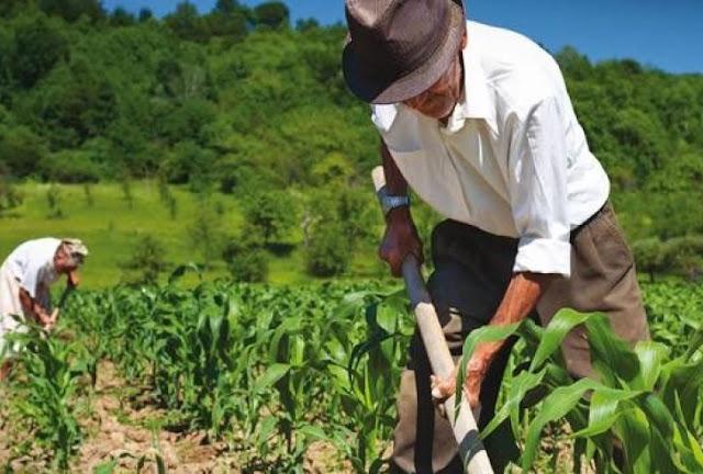 Μειώνονται οι ασφαλιστικές εισφορές των αγροτών