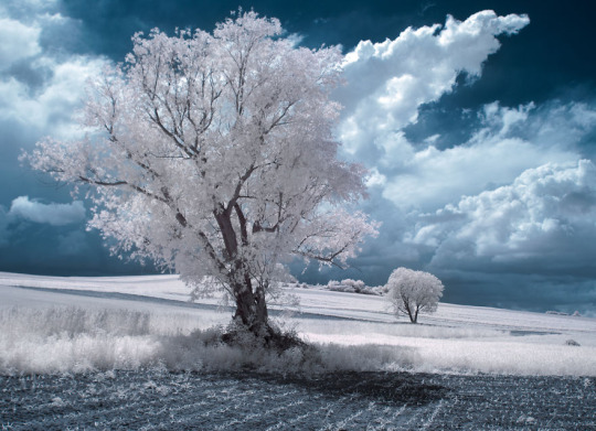 Beauty  Trees Photography