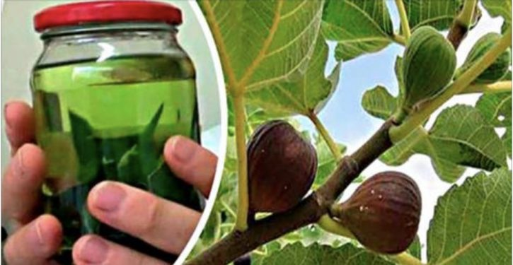 Treat Diabetes, Ulcers, Lower Your Cholesterol And Triglyceride Levels With Fig