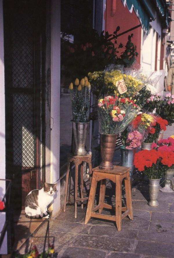 venice flower shop