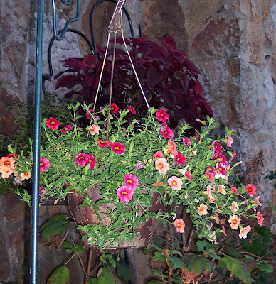 Autumnal Hanging Baskets