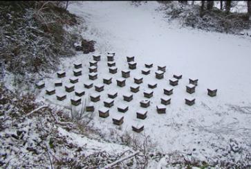 Στείλτε μας φωτογραφίες από τα χιονισμένα σας μελισσάκια