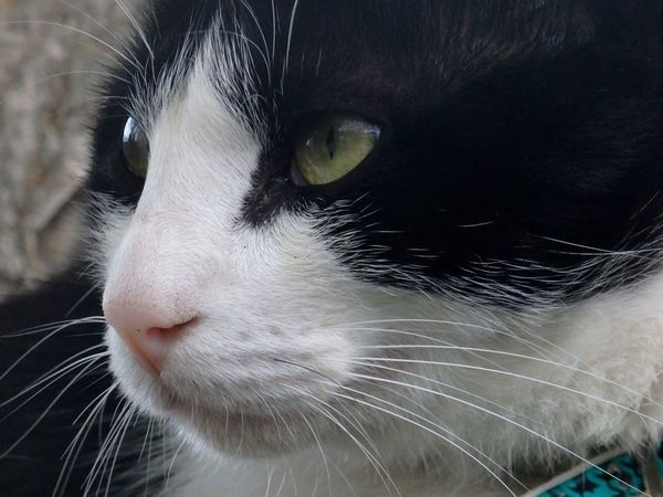 miradouro de santa luzia cat
