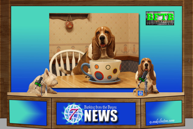 BFTB NETWoof News with Basset Hound and coffee cup on backscreen
