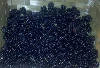 fresh blackberries, harvesting blackberries, life on a farm, summer harvest, blackberry cobbler,