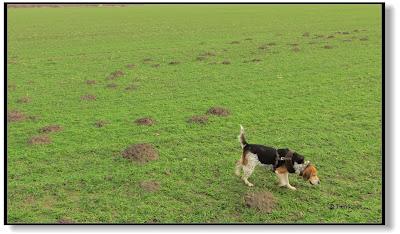 alte Bauernregel