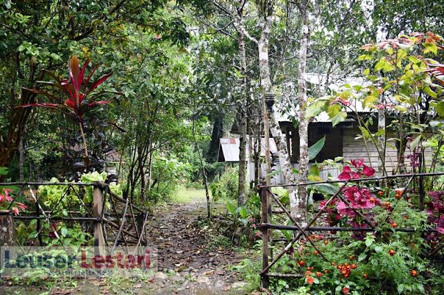 pesona Hutan Leuser