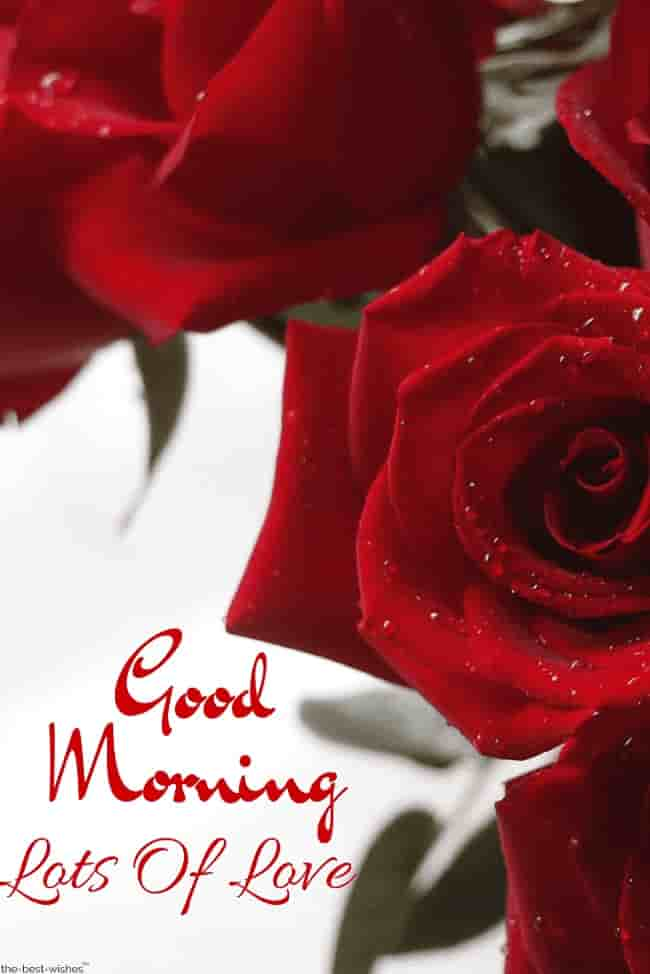 red roses good morning images