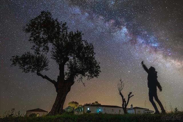 оливкове дерево під Чумацьким Шляхом