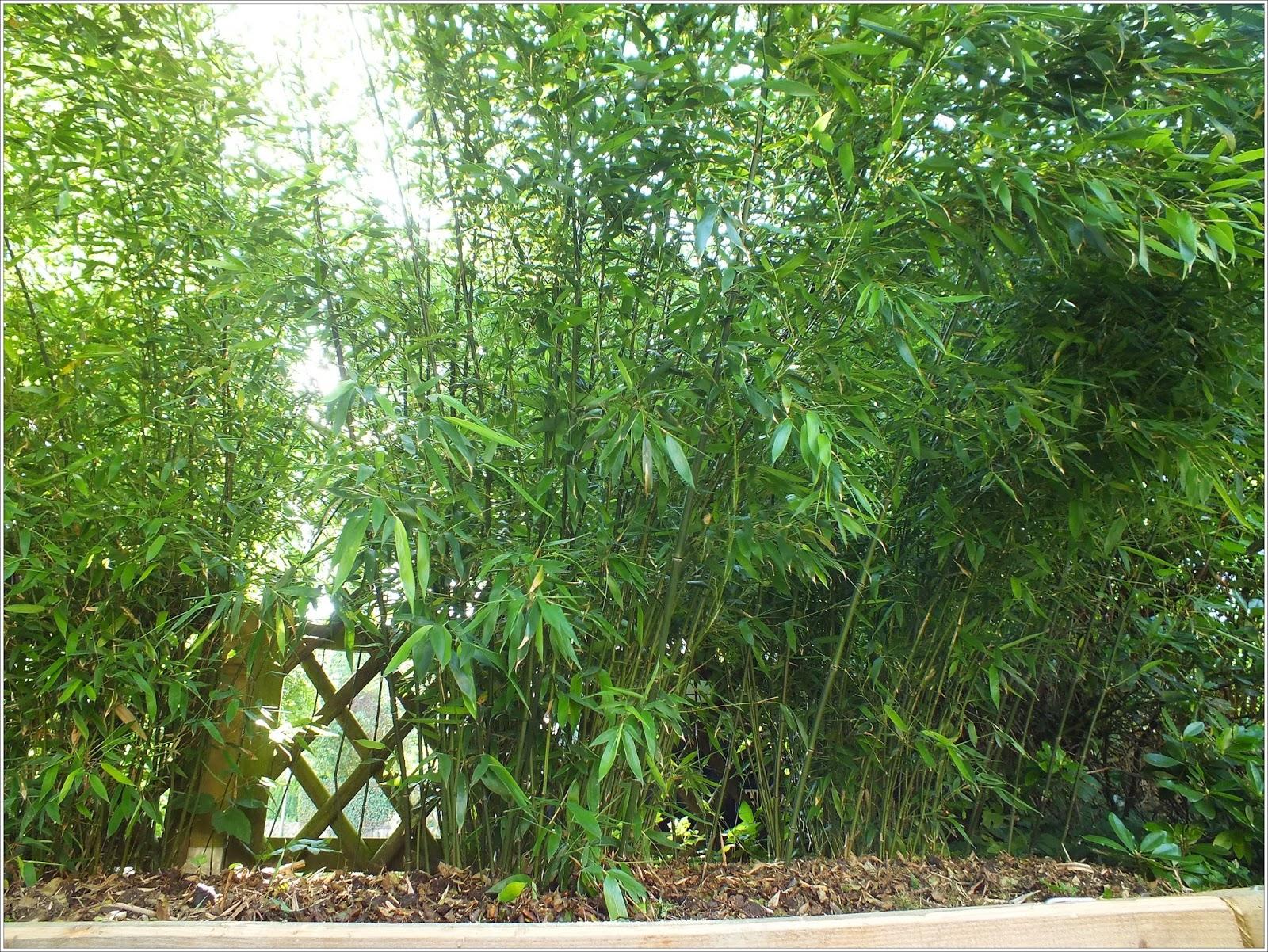 bambus kamelien yuccas vorher nachher. Black Bedroom Furniture Sets. Home Design Ideas