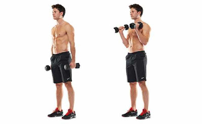 3 Bicep Dumbbell Exercises