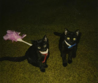Chilipepper and her brofurcat Spooky 1997.