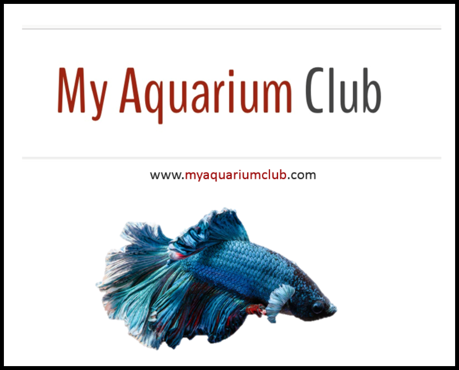 My Aquarium Club