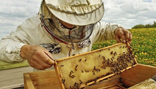 Μελισσοκομία: Από την άνοιξη περίμεναν, αλλά τα χάλασε ο καιρός