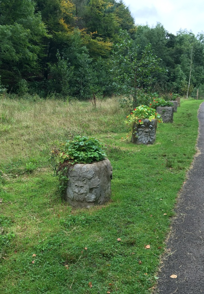 flower-pots-cwm-carn-forest