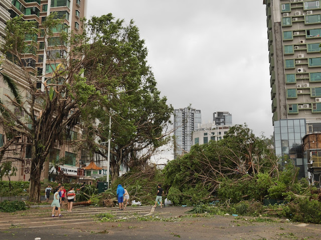 fallen tree on Lian'an Road in Zhuhai