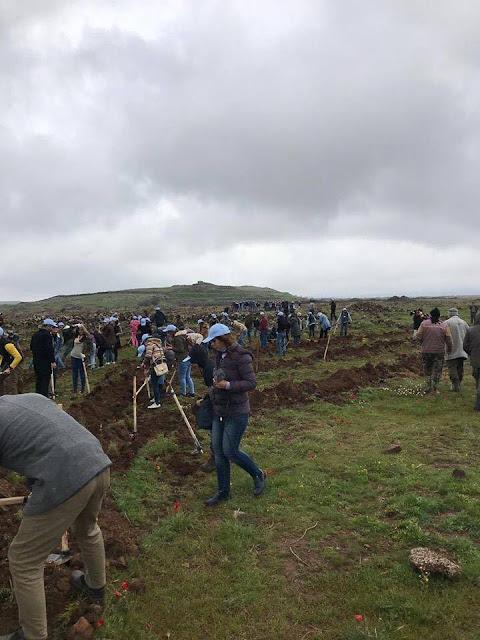 الأولى من نوعها في سوريا حملة المليون شجرة بالسويداء.. ردا على التحطيب الجائر للغابات (صور)