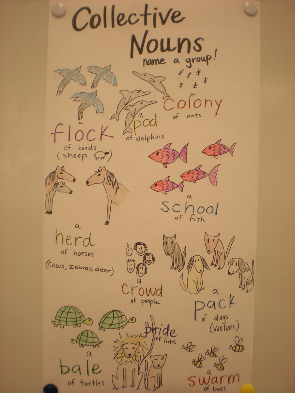 Those Who Can Teach 2nd Grade Collective Nouns