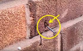 """Σούπερ μέλισσα με """"υπερφυσική δύναμη"""" βγάζει καρφί από τοίχο!  Δείτε… [video]"""