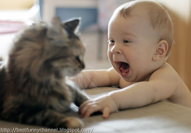 Funny baby and cat.