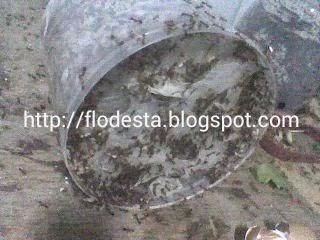 jaring sarang semut