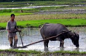 sejarah pertanian organik