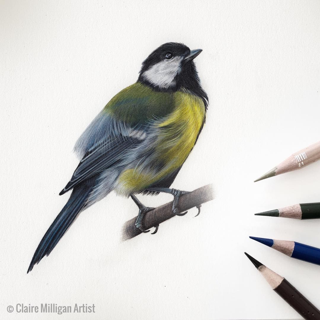 09-Great-Tit-Claire-Milligan-Pet-Portraits-and-Wildlife-Art-www-designstack-co