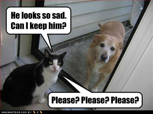 Funny Quotes About Dogs. QuotesGram