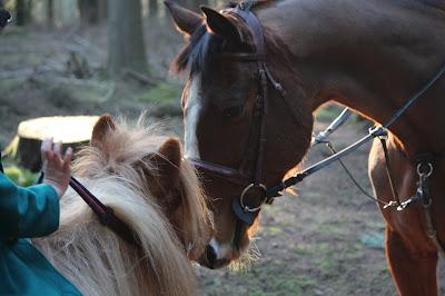 Horses meeting