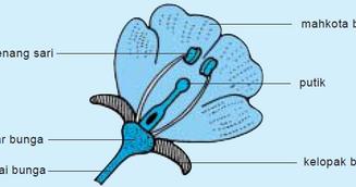Pembagian Jenis Bunga Bagian Bagian Bunga Dan Fungsinya Pelajaran