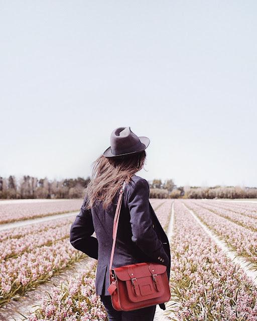 champs de fleurs La Torche