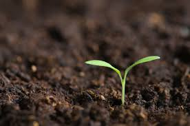 DEFINITION OF THE SOIL