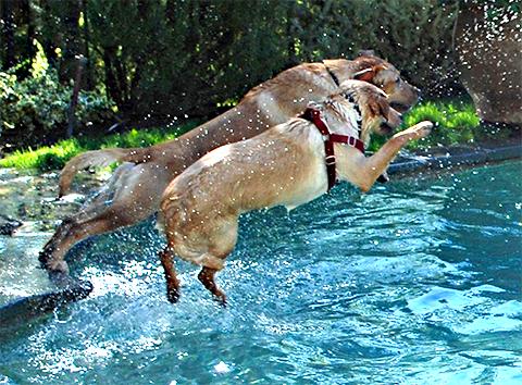 ensinando o cachorro a nadar