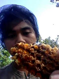 panen madu hutan surabaya