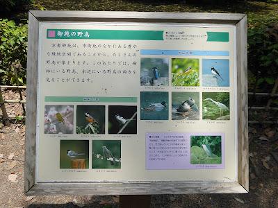 京都御苑の野鳥